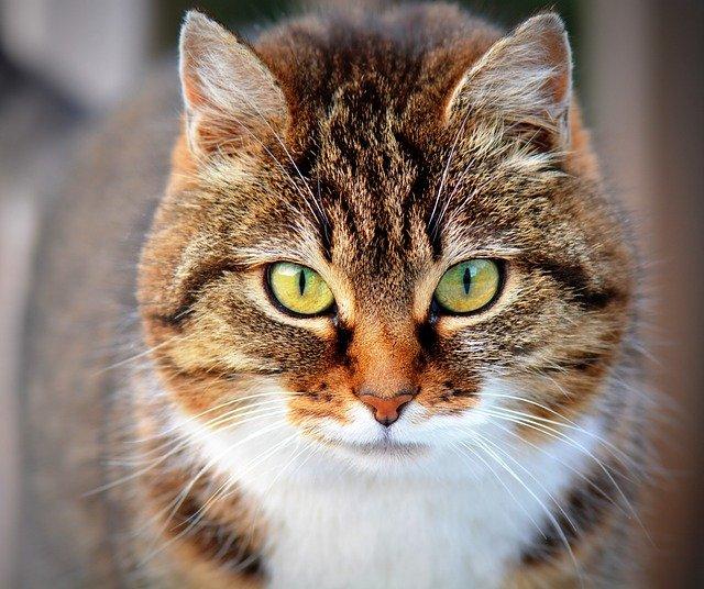 Pet Wellness Care in Inverness, FL